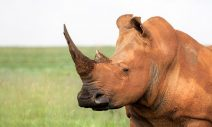 Barbara Creecy – Source Call for Scientific Comment on South Africa Proposals to CITES concerning listing status of the White Rhino and Black Rhino – Republic of South Africa